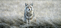 winter-wildlife-tours02
